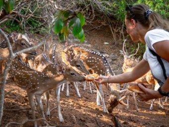 Тринкомали + Нилавели + Pigeon Island: 9 Лучших Развлечений на Северо-Востоке Шри-Ланки